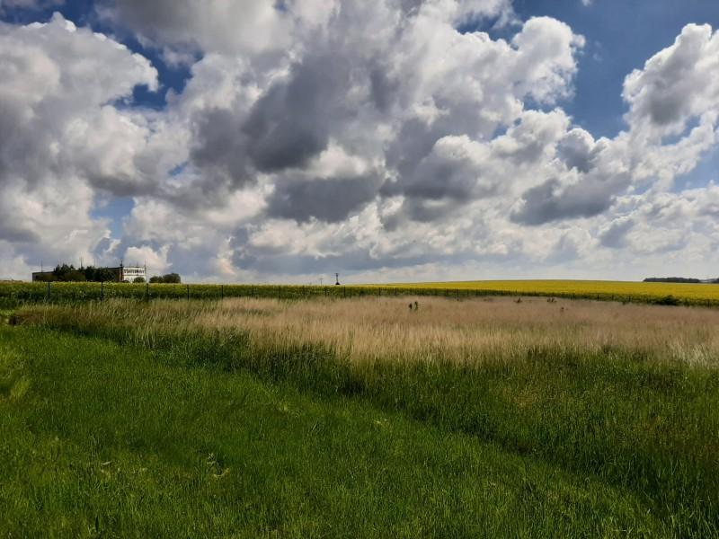 Prodej pozemku 2.505m2, Praha 8 - Březiněves